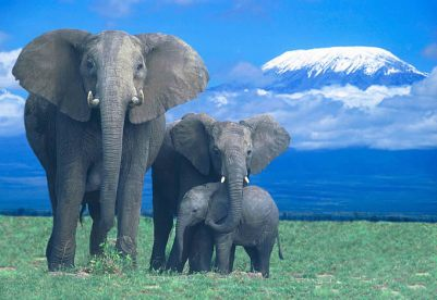 xelephants-home-1_jpg_pagespeed_ic_y-FnJYS4XS